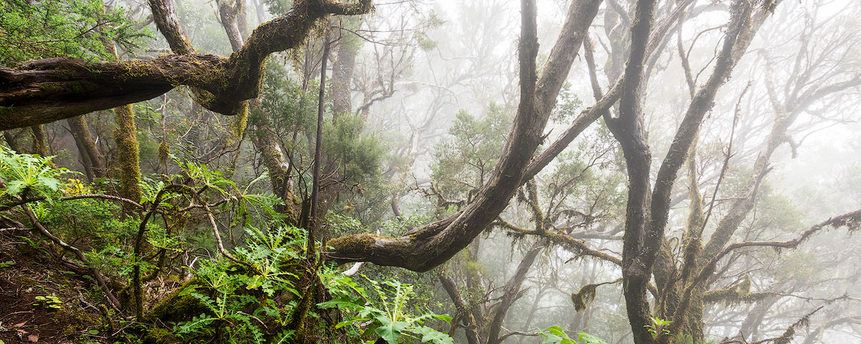 A highlight for every photographer and nature lover: hiking in the cloud forests of La Gomera